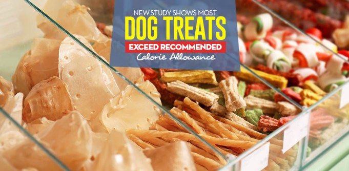 A Study Shows Most Dog Treats Exceed Recommended Calorie Allowance