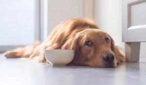 Best Dog Food for Gastrointestinal Problems