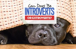 Can Our Dogs Be Introverts or Extroverts