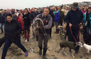 Extraordinary dog rescue stories