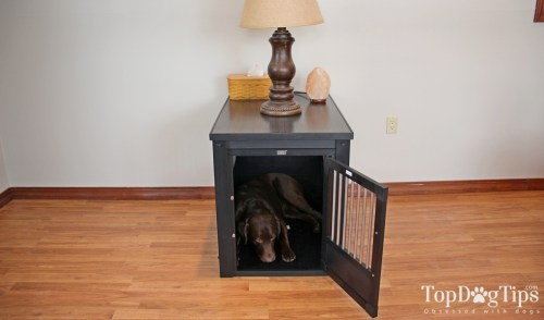 Crate Your Dog When You're Away from Home