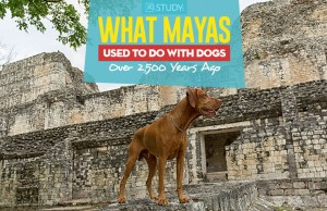New Study - We Now Know What Mayas Used to Do With Dogs Over 2,500 Years Ago