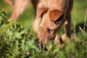 Now we know why dogs like to eat feces