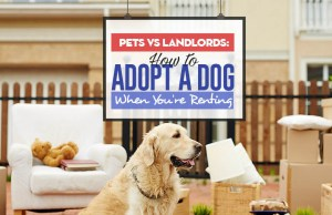Pets vs Landlords - How to Adopt a Dog When You're Renting