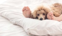 Scientists Say You Can Continue Sharing Bed With Your Dog ...