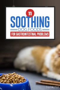 The Best Dog Food for Gastrointestinal Problems
