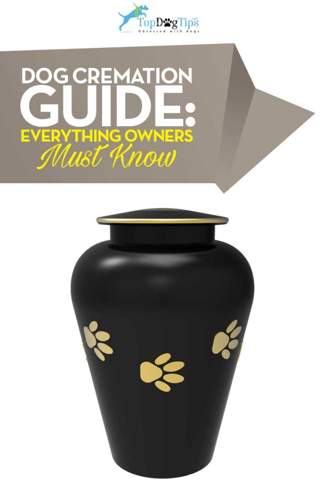 The Guide to Dog Cremation