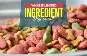 The Guide to Limited Ingredient Dog Food
