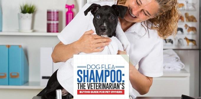 The Veterinarians Guide on Dog Flea Shampoos