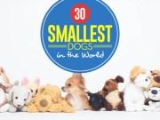 Top 30 Smallest Dog Breeds