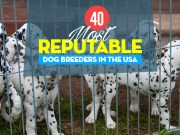 Top 40 Reputable Dog Breeders in USA