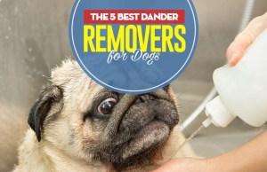 Top 5 Best Dog Dander Treatments