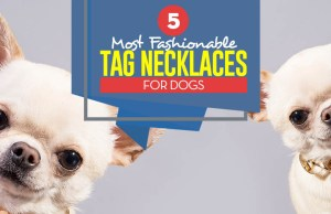 Top 5 Best Dog Tag Necklace and Fashion Dog Collars
