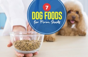 Top Best Dog Food for Firm Stools