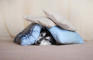 Your Dog's Noise Anxiety May Be Related to Musculoskeletal Pain