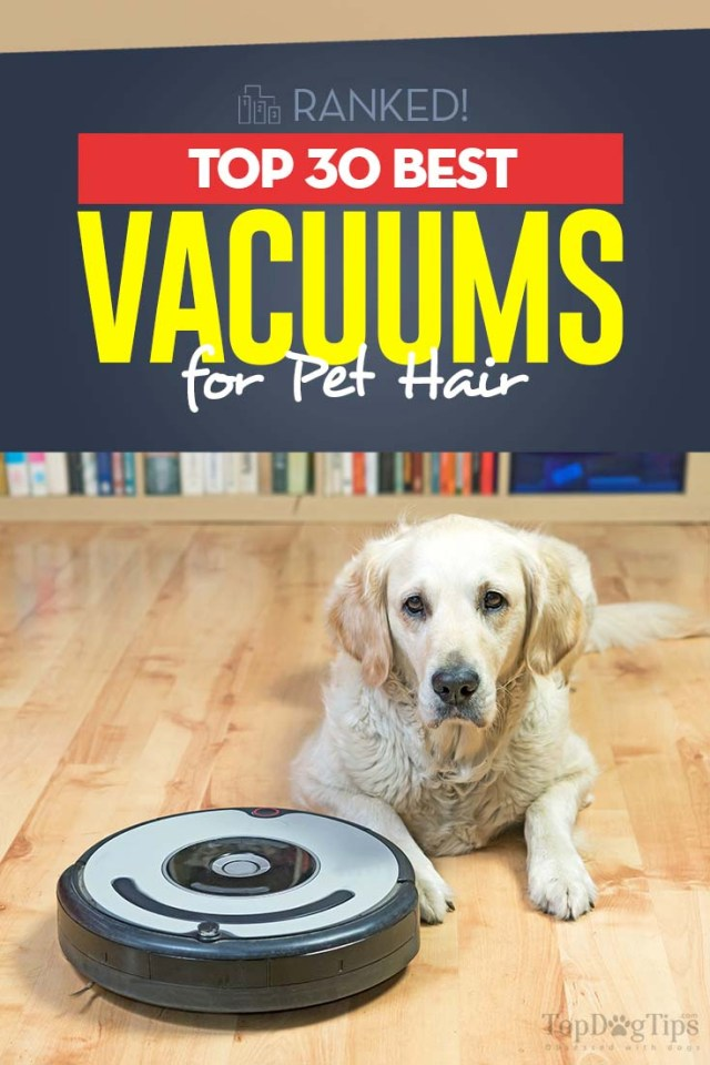 30 Top Rated Best Vacuum for Dog Hair