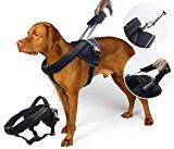 Yogadog Heavy Duty Harness