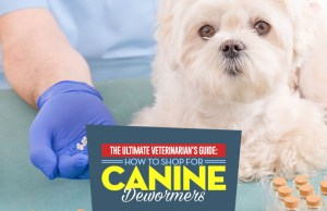 A Vet's Guide to Dewormer for Dogs - The How, What, Why and When