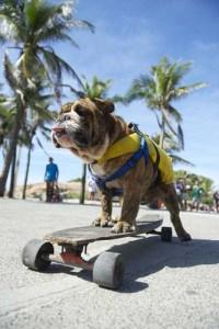 Teach your pup how to skateboard