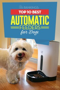 The 10 Best Automatic Dog Feeders - Full Review Round-up