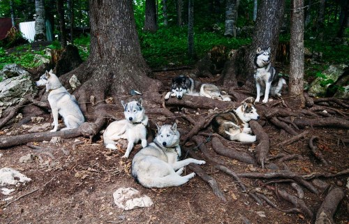 The Differences Between Wolves and Dogs