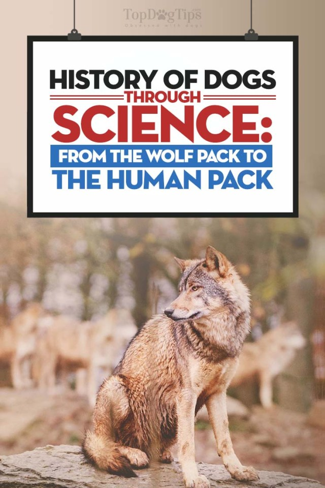 The History of Dogs Based on Science
