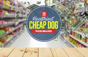 Top 20 Best Cheap Dog Food Brands