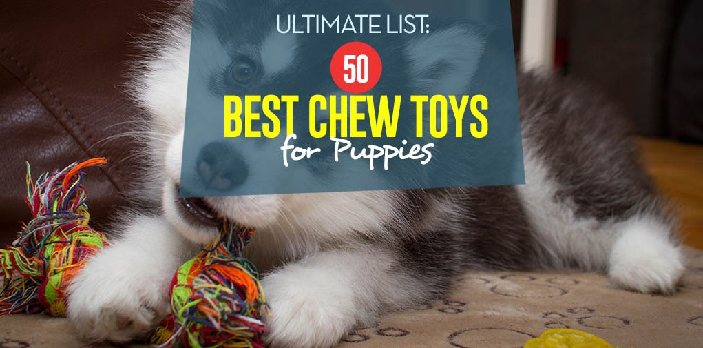 Top 50 Best Chew Toys for Puppies