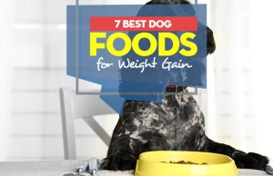 Top 7 Best Dog Foods for Weight Gain