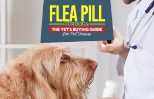 Vet Guide on Flea Pills for Dogs