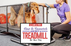 Veterinarian's Guide on Treadmill for Dogs