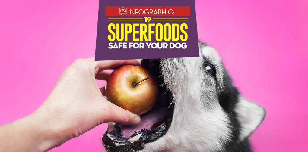 19 Superfoods for Dogs