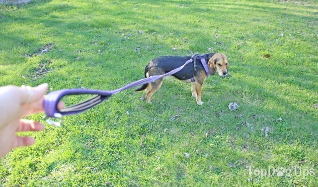 BAYDOG Harnesses, Leashes and Accessories for Dogs