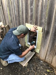Building a dog door in the fence for the two friends