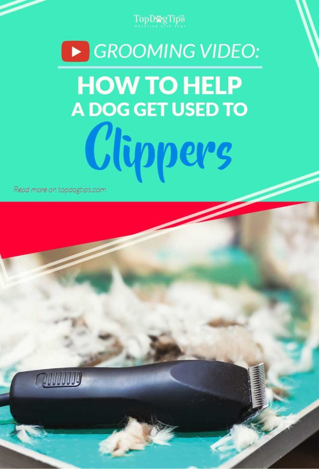 Guide on How To Help A Dog Get Used to Pet Clippers