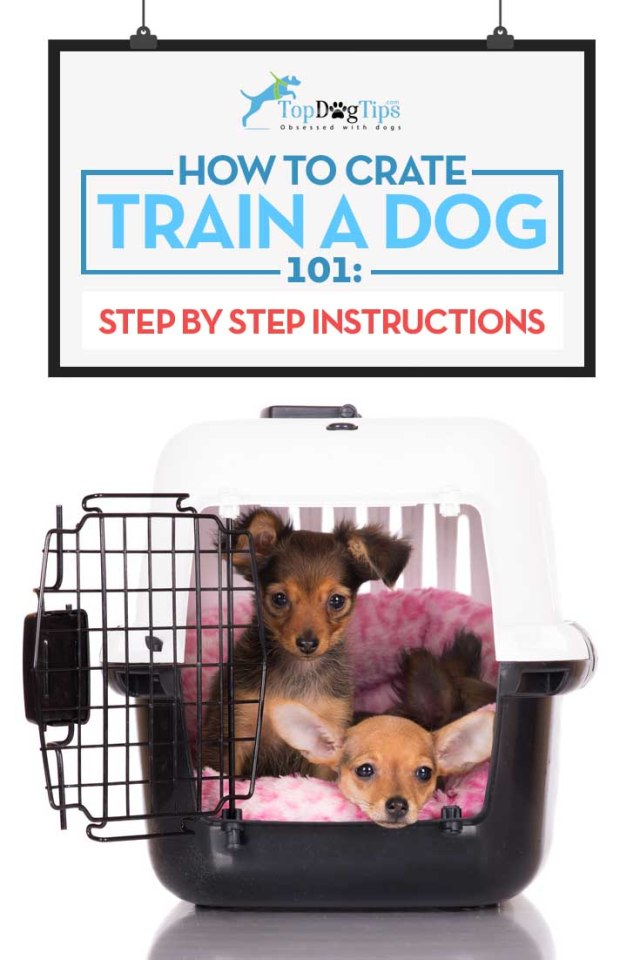 Guide on How to Crate Train Dogs