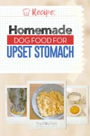 Homemade Dog Food for Upset Stomach Recipe