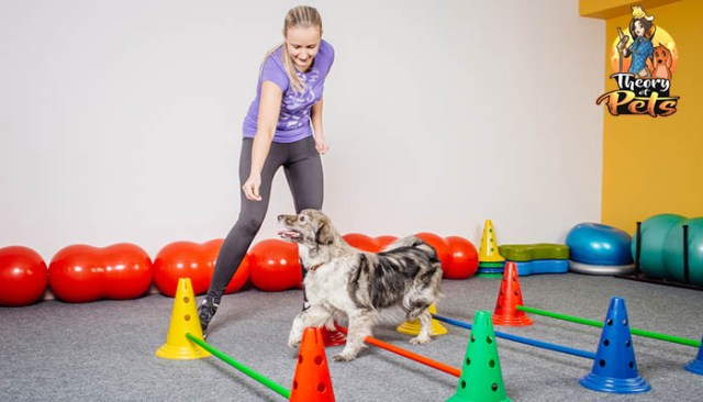 How to Be More Active With Your Dog