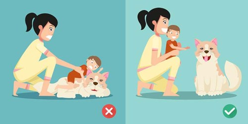 17 Ways to Keep Kids and Dogs Safe