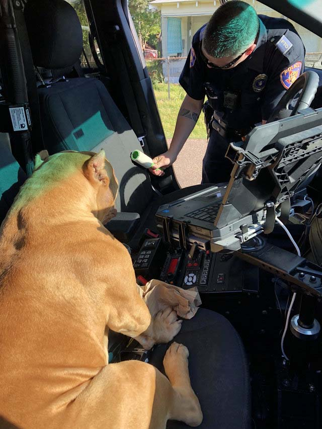 Police officer at work while the dog is observing