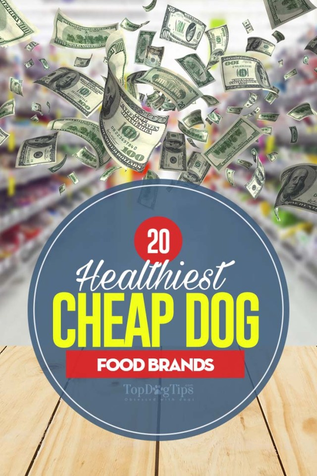 Top 20 Best Cheap Dog Food Brands That Are Healthy