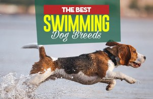 Top 20 Best Swimming Dogs that Enjoy Water