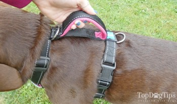 Triple-clip dog harness with a handle.