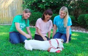 Deaf Dog Missing For 5 Months Reunites With Family In Texas After Staying In Minnesota