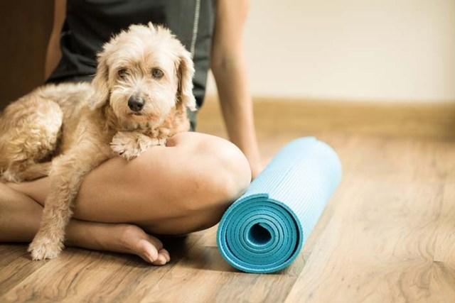 Join a Dog Yoga Class