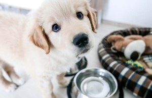 New Puppy Shopping Checklist - 22 Things You'll Need