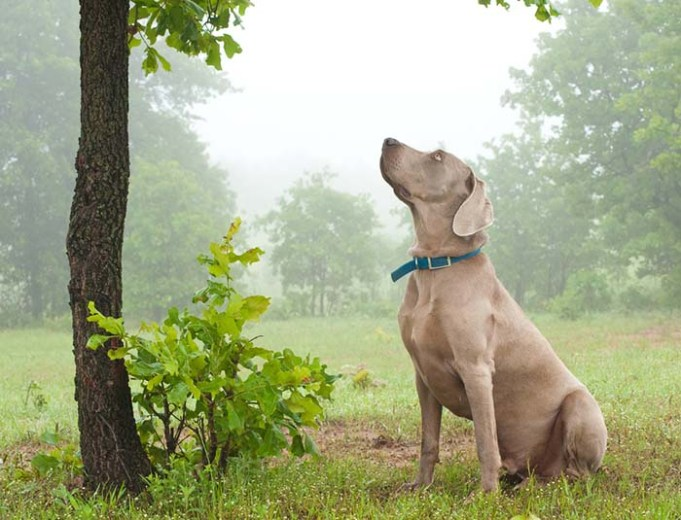 Researchers Found That Dogs Can Detect Diseases That Kill Trees