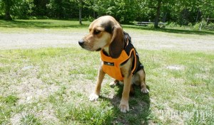 Who should buy dog harnesses?