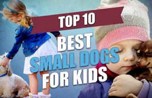 The Best Small Dogs for Kids