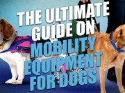 Mobility Equipment for Dogs: The Ultimate Guide